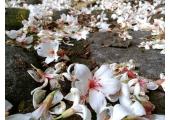 花蓮景點-楓林步道...